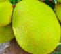 Le fruit jacquier, un fruit exotique traditionnel à découvrir au Vietnam
